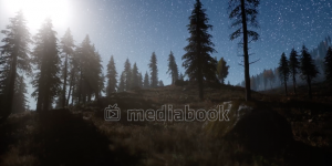 Forest Milky Way